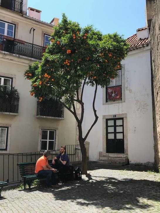 oranger-Portugal-1